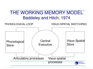 THE WORKING MEMORY MODEL Baddeley and Hitch, 1974