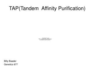 TAP(Tandem  Affinity Purification)