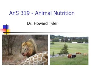 AnS 319 - Animal Nutrition