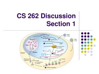 CS 262 Discussion Section 1