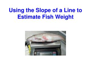 Using the Slope of a Line to Estimate Fish Weight