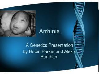 Arrhinia