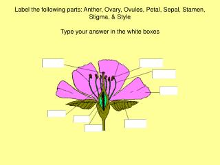 Flower parts labeled: Anther, Ovary, Ovules, Petal, Sepal, Stamen, Stigma, & Style