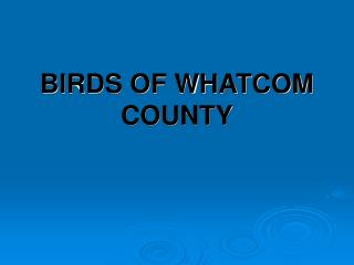 BIRDS OF WHATCOM COUNTY