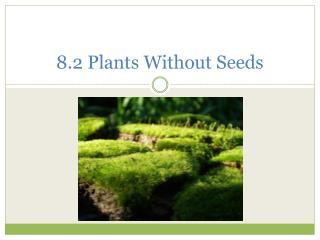 8.2 Plants Without Seeds