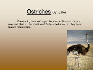 Ostriches By: Jake