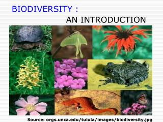 BIODIVERSITY :                    AN INTRODUCTION