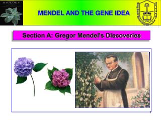 Section A: Gregor Mendel's Discoveries