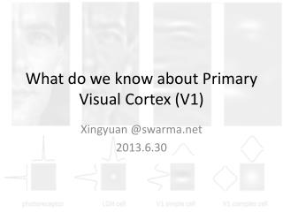 What do we know about Primary Visual Cortex (V1)