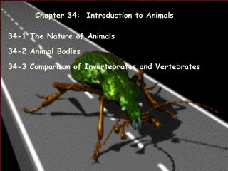 Chapter 34:  Introduction to Animals