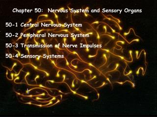 Chapter 50:  Nervous System and Sensory Organs