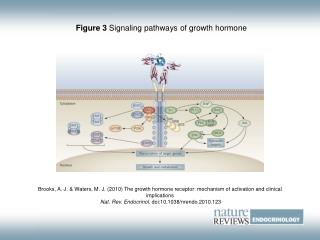 Figure 3  Signaling pathways of growth hormone