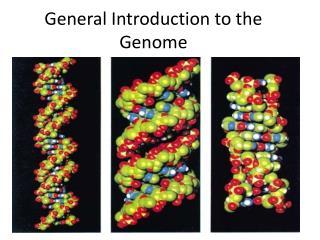 General Introduction to the Genome