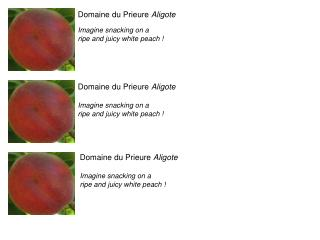 Domaine du Prieure  Aligote Imagine snacking on a  ripe and juicy white peach !