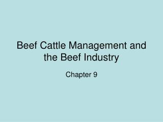 Beef Cattle Management and the Beef Industry