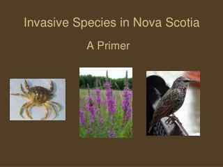 Invasive Species in Nova Scotia