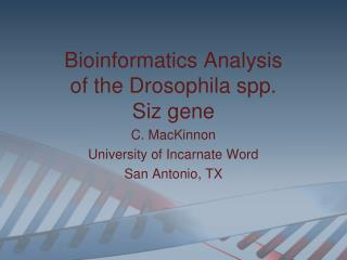 Bioinformatics Analysis of the Drosophila spp.  Siz  gene C. MacKinnon