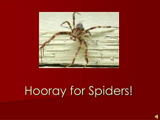 Hooray for Spiders!