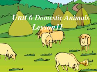 Unit 6  Domestic Animals           Lesson11