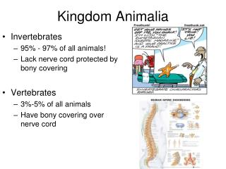 Image of: Peta Konsep Kingdom Animalia Slideserve Ppt Hierarchy Example Kingdom Kingdom Animalia Phylum Phylum