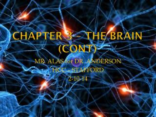 CHAPTER 3 – THE BRAIN ( cont )