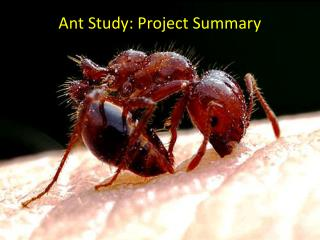 Ant Study: Project Summary