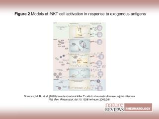 Figure 2  Models of  i NKT cell activation in response to exogenous antigens