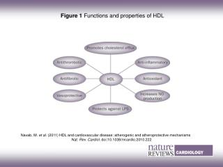 Figure 1  Functions and properties of HDL