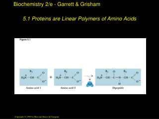 5.1 Proteins are Linear Polymers of Amino Acids
