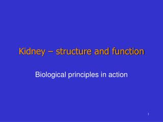 Kidney – structure and function