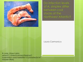 Do infection levels of A. simplex differ between cod stocks of the Northwest Atlantic?