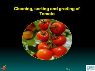 Cleaning, sorting and grading of Tomato