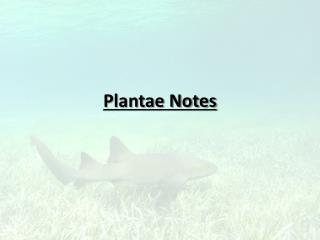 Plantae Notes