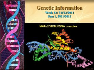 Genetic Information Week 13: 7-8/12/2011 Sem  1, 2011/2012