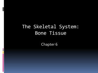 The Skeletal System: Bone Tissue