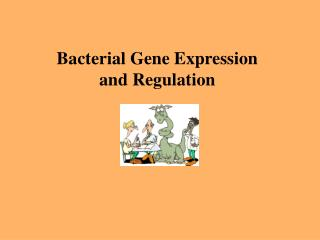 Bacterial Gene Expression  and Regulation