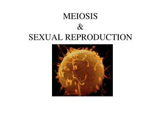 MEIOSIS & SEXUAL REPRODUCTION