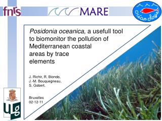 Posidonia oceanica , a usefull tool to biomonitor the pollution of Mediterranean coastal