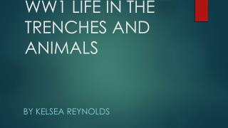 WW1 LIFE IN THE TRENCHES AND ANIMALS