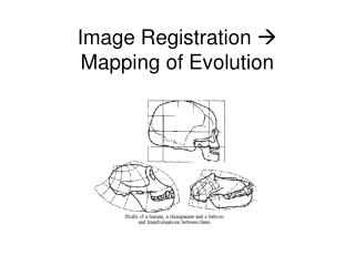 Image Registration   Mapping of Evolution