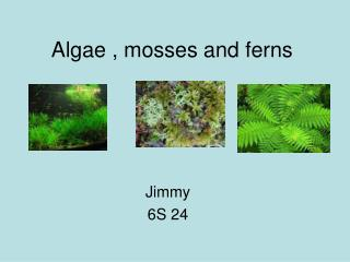 Algae , mosses and ferns