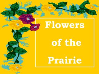 Flowers  of the  Prairie