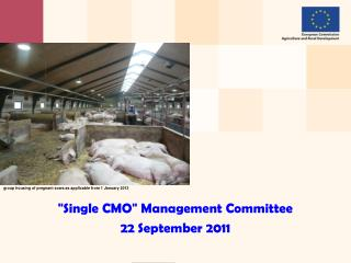 """ Single CMO ""  Management Committee 22 September 2011"