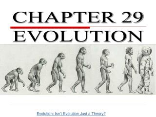 CHAPTER 29 EVOLUTION