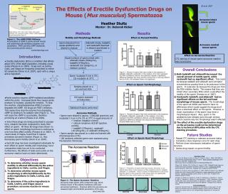 The Effects of Erectile Dysfunction Drugs on Mouse ( Mus musculus ) Spermatozoa Heather Stultz