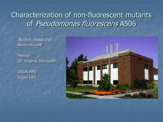 Characterization of non-fluorescent mutants of  Pseudomonas fluorescens  A506