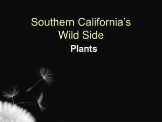 Southern California's Wild Side   Plants