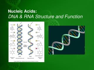 Nucleic Acids:  DNA & RNA Structure and Function
