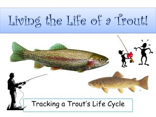 Living the Life of a Trout!