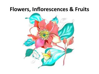Flowers, Inflorescences & Fruits